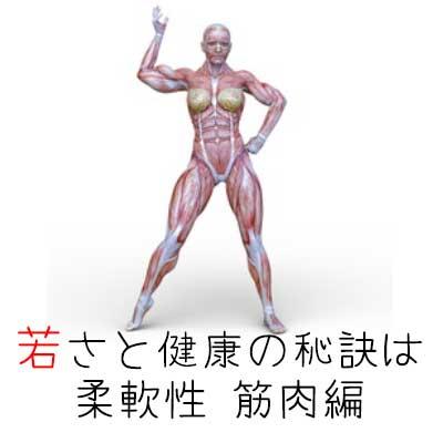 若さと健康の秘訣は柔軟性②筋肉編